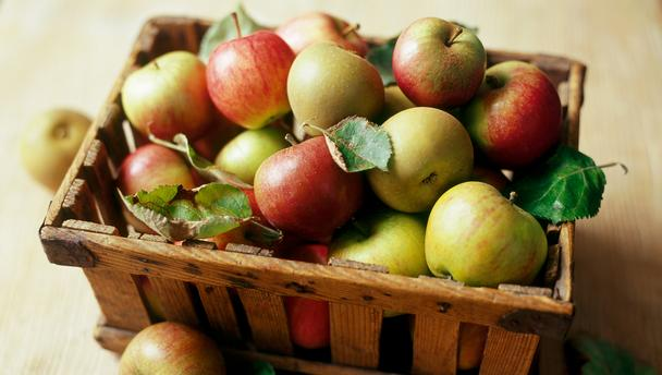 english apple harvest